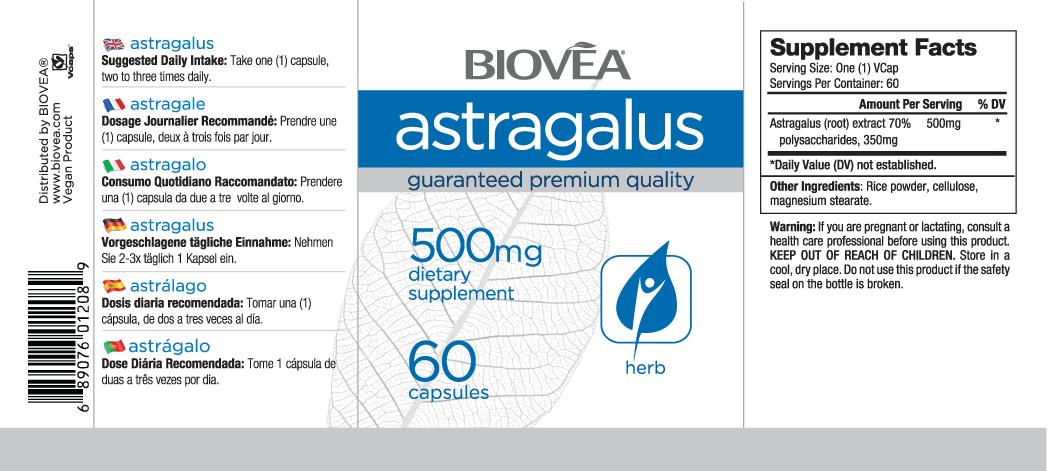 ASTRAGALUS 500mg 60 Capsules